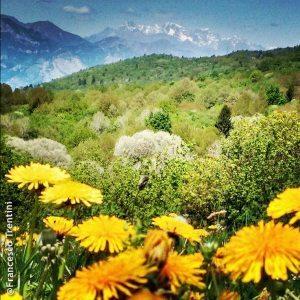 Il Monte Baldo chiamato anche Giardino d'Europa