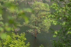 Lago di Loppio: una visita all'isola di S. Andrea