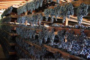 Moscato di Scanzano per il Tour del Lago di Garda attraverso il vino