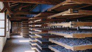 I vini della Valpollicella: L'Amarone