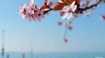 Aprile dolce dormire: la selezione di foto di IgersVerona