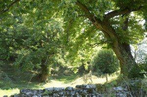 Marrone di san Zeno Dop, il Bio delle castagne