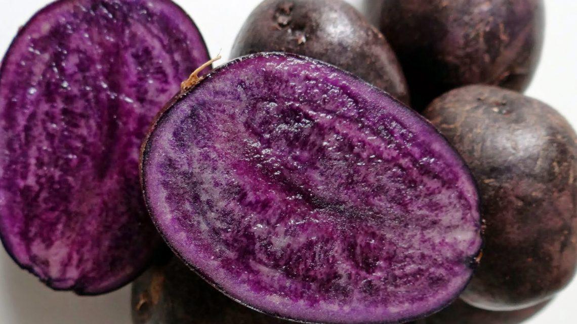 In Val di Ledro è tempo di patate viola