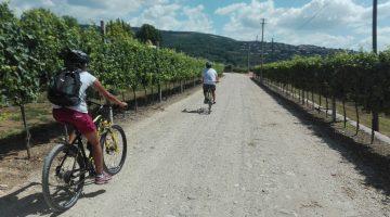 Dalla Valpolicella a Verona in MTB, prodotti tipici e tanto divertimento