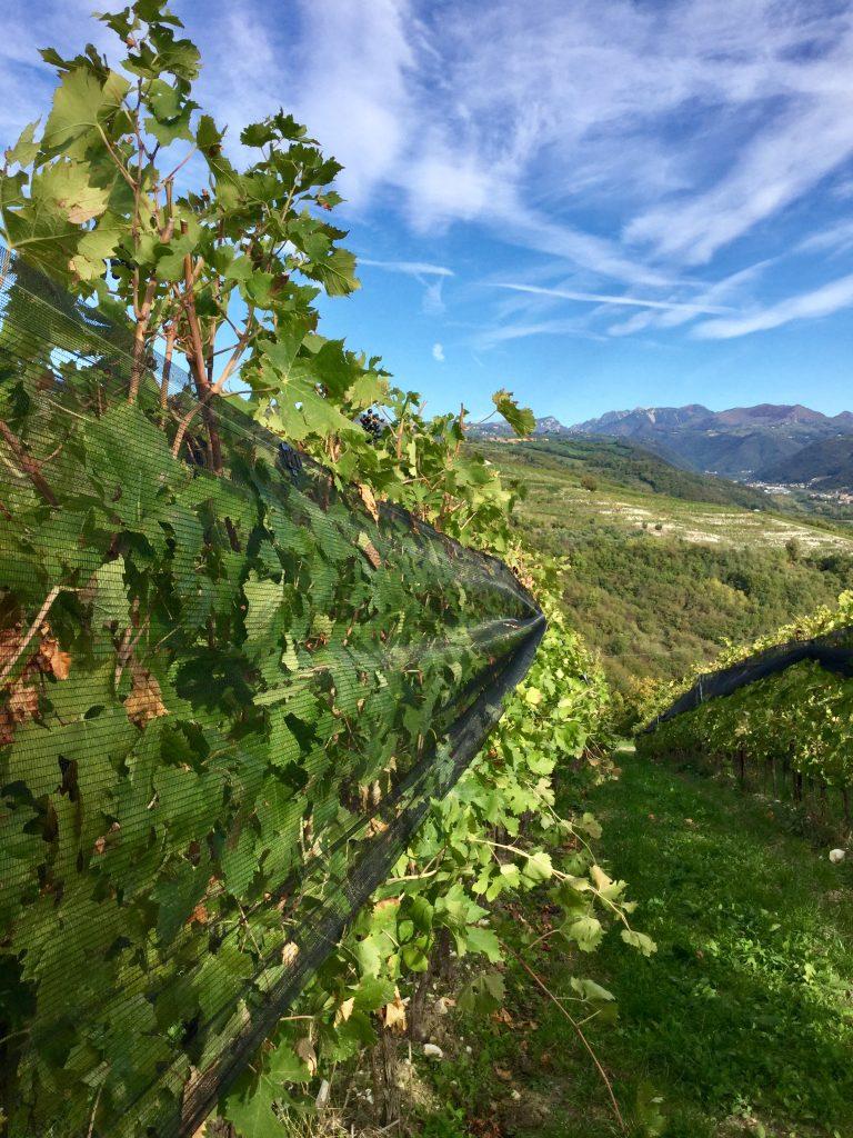 Una domenica in Valpolicella, tra vigne e bellezza