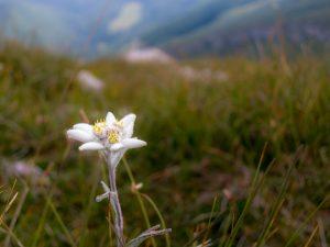 Ricordi di un'escursione in mtb sul Monte Altissimo²