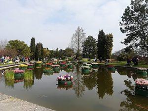 """Il Parco Giardino Sigurtà e la """"Tulipanomania"""""""