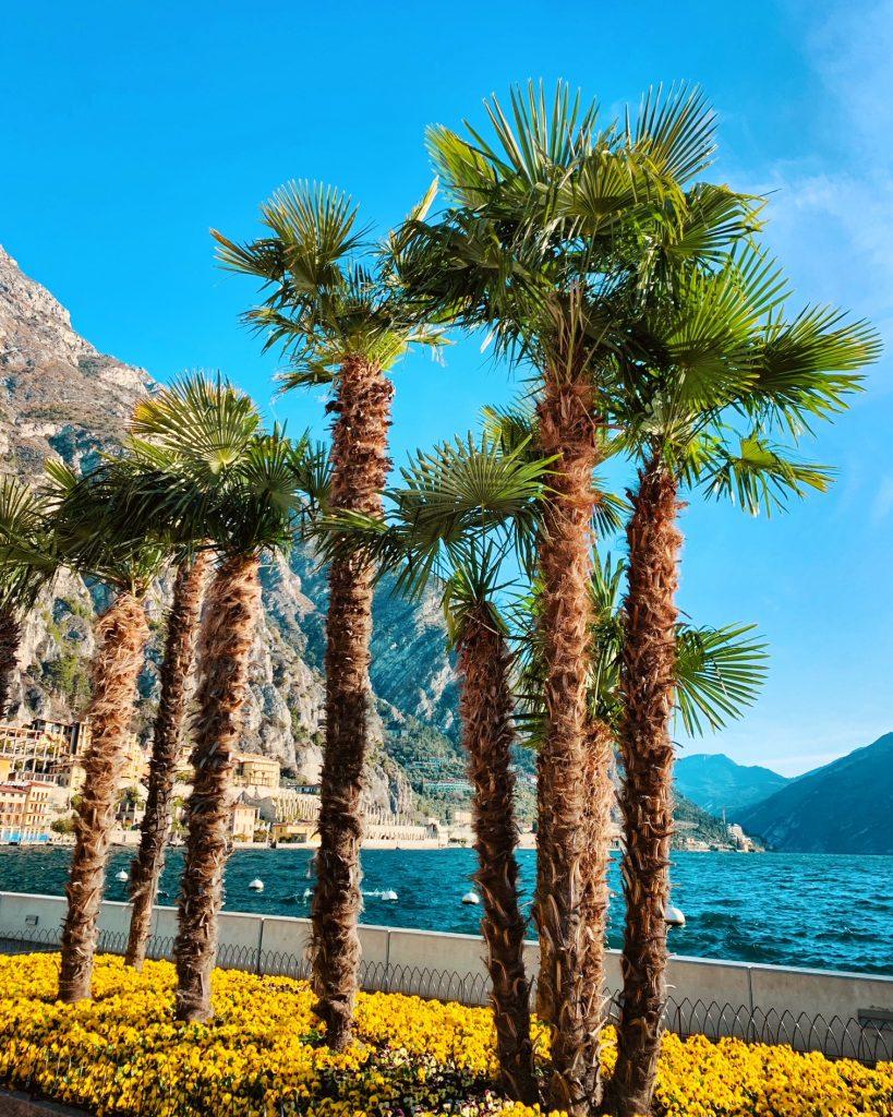 Trend 2021: un pic-nic enogastronomico vista Lago di Garda.