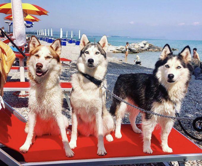 Spiagge per cani Lago di Garda.