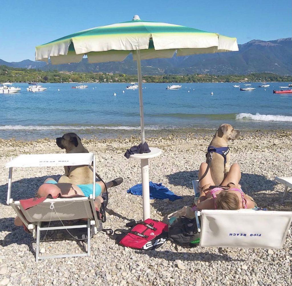 Spiagge attrezzate per cani e aree dog beach sul Lago di Garda.