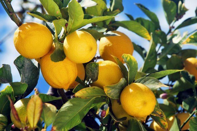 Le limonaie del Lago di Garda.